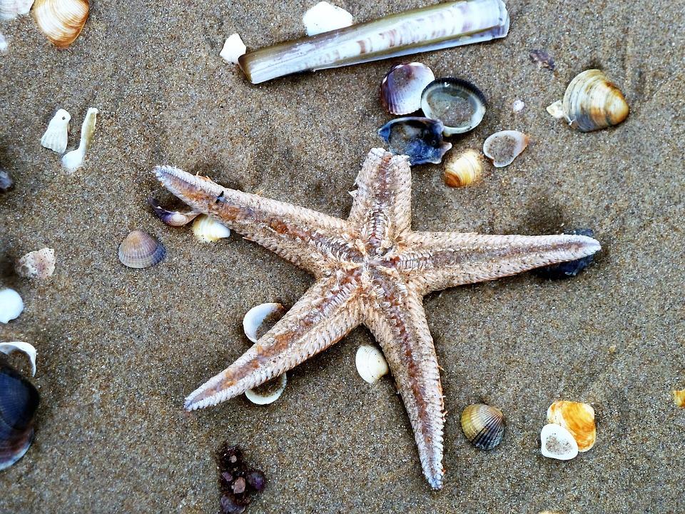 Starfish, Beach, Shell, Shelling, Sand