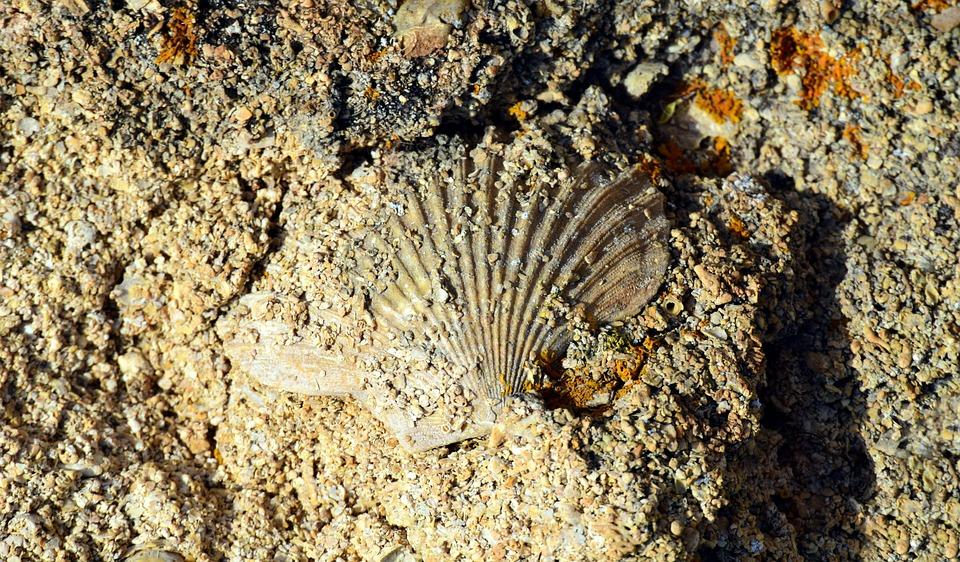 Shell, Scallop, Sand, Sand Stone, Memory, Petrified