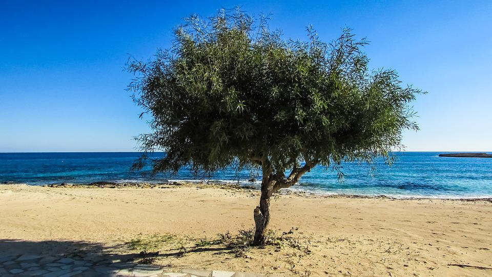 Cyprus, Ayia Napa, Makronissos Beach, Tree, Sand