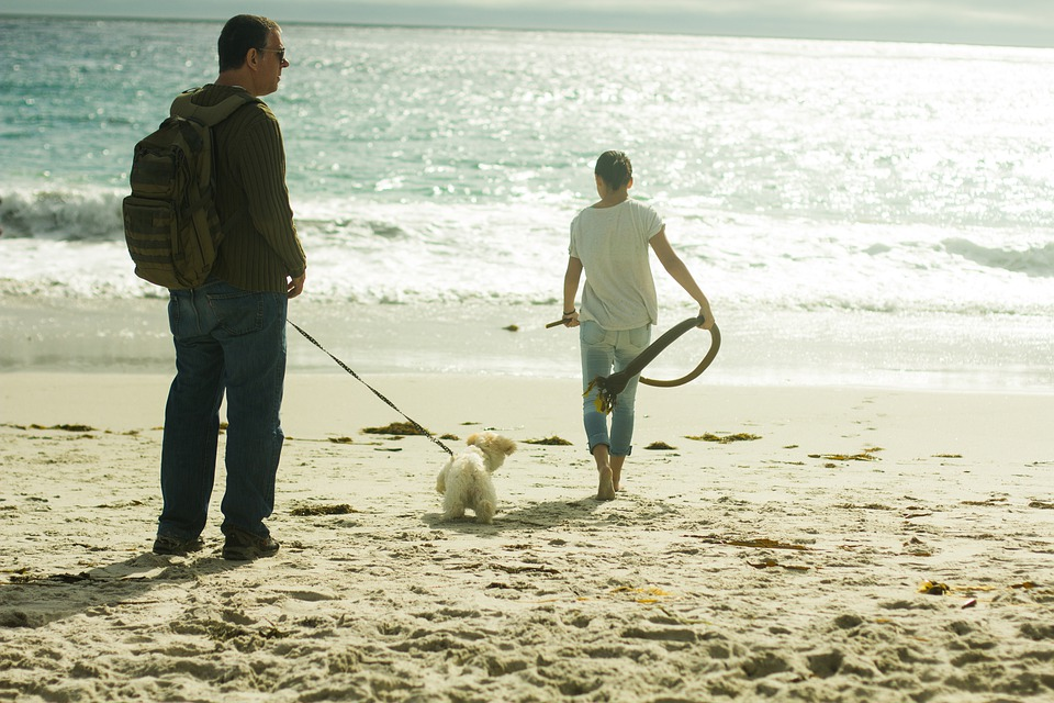 Beach, Walk, Walking, Ocean, Sea, Water, Sand, Coast