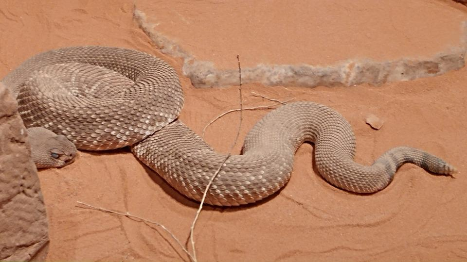 Snake, Nature, Animal, Reptile, Wildlife, Sand, Dry