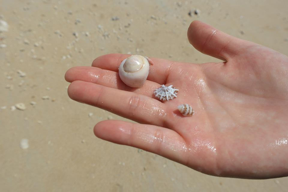 Sea, Hand, Clam, Sandy, Beach, Nature