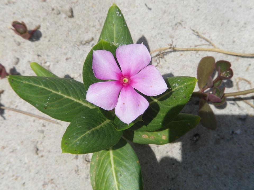 Flowers, Sandy, Summer, Thailand