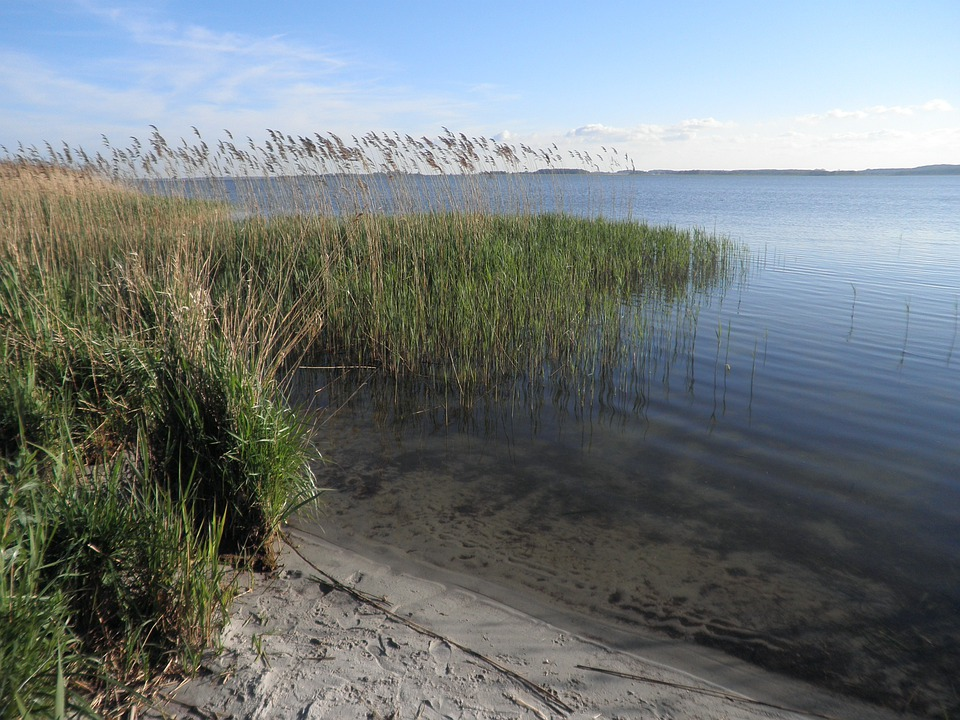 Reed, Landscape, Lake, Sandy Shore, Island Of Usedom