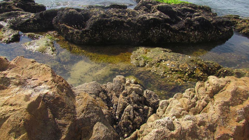 Rock, Santa Catarina, Beach, Boat, Fishing