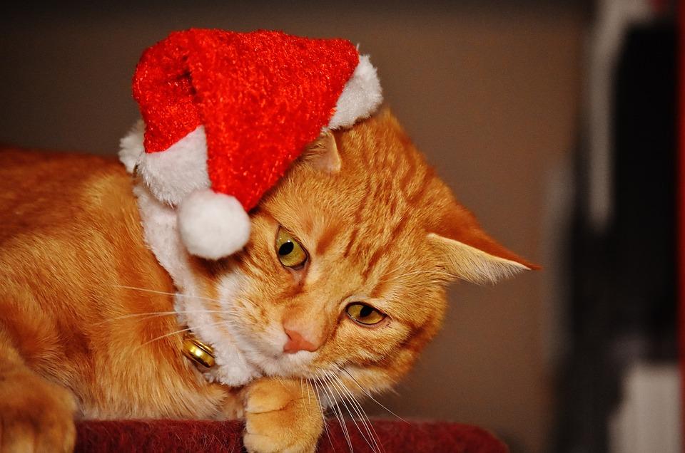 Stupendous Free Photo Santa Hat Cute Christmas Cat Mackerel Funny Red Max Pixel Easy Diy Christmas Decorations Tissureus