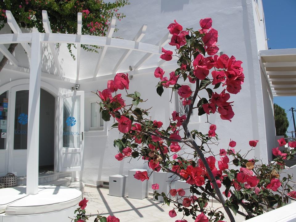 Flower, Home Stay, B B, Island, Greece, Santorini