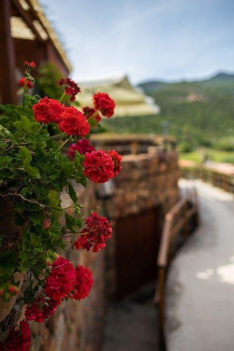 Flower, Nature, Corsica, Sardinia, Wallpaper