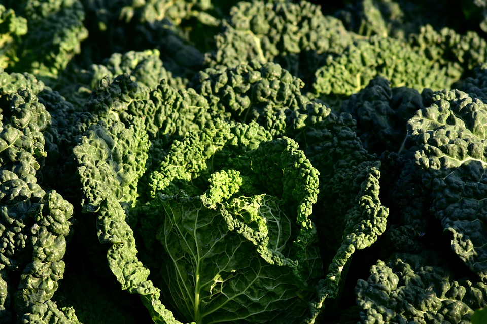 Savoy Cabbage, Kohl, Vegetables, Savoy, Healthy, Food