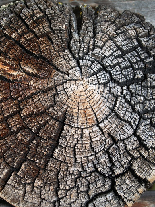 Wood, Nature, Texture, Tree, Old, Saw Cut, Weathering