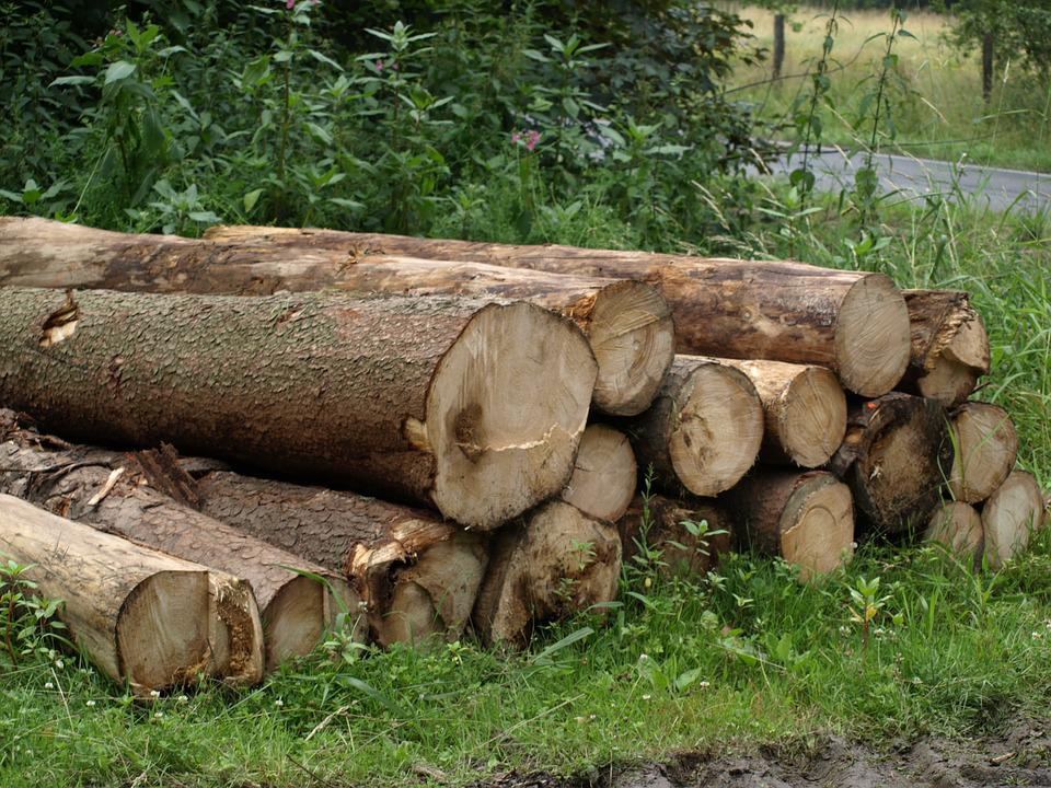 Tree Trunks, Forestry Work, Sawed Off, Stacked