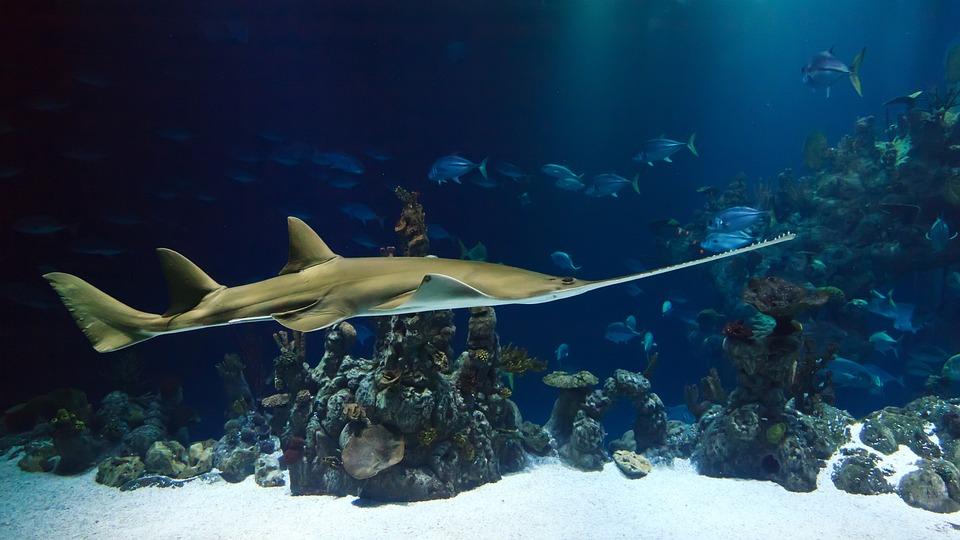 Animal, Shark, Sawfish, Aquarium, Creature, Deep, Fish