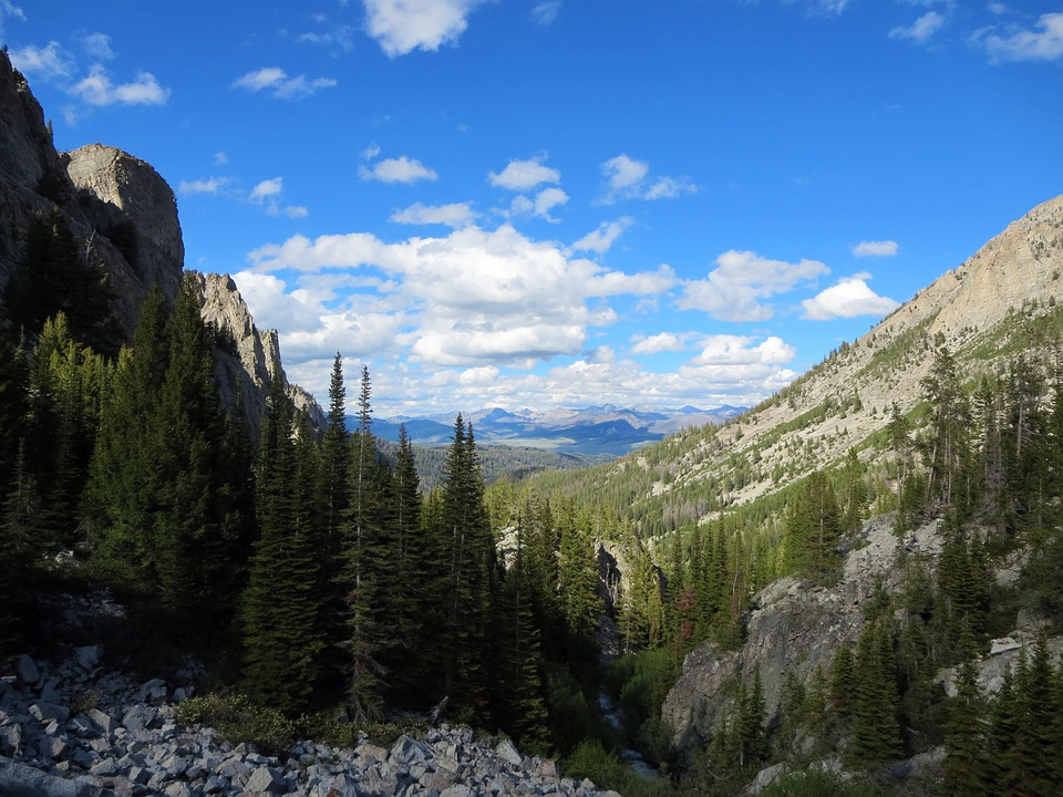 Sawtooth, Mountain, Pine Tree, Wilderness, Idaho