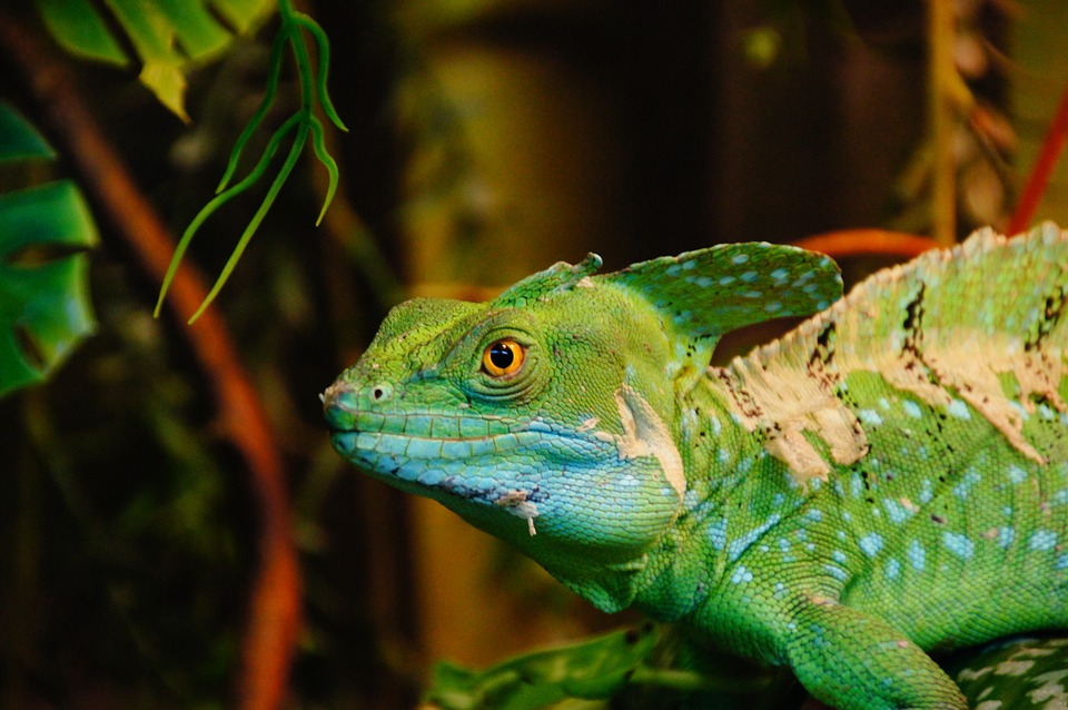 Lizard, Green, Zoo, Jesus Christ Lizard, Reptile, Scale