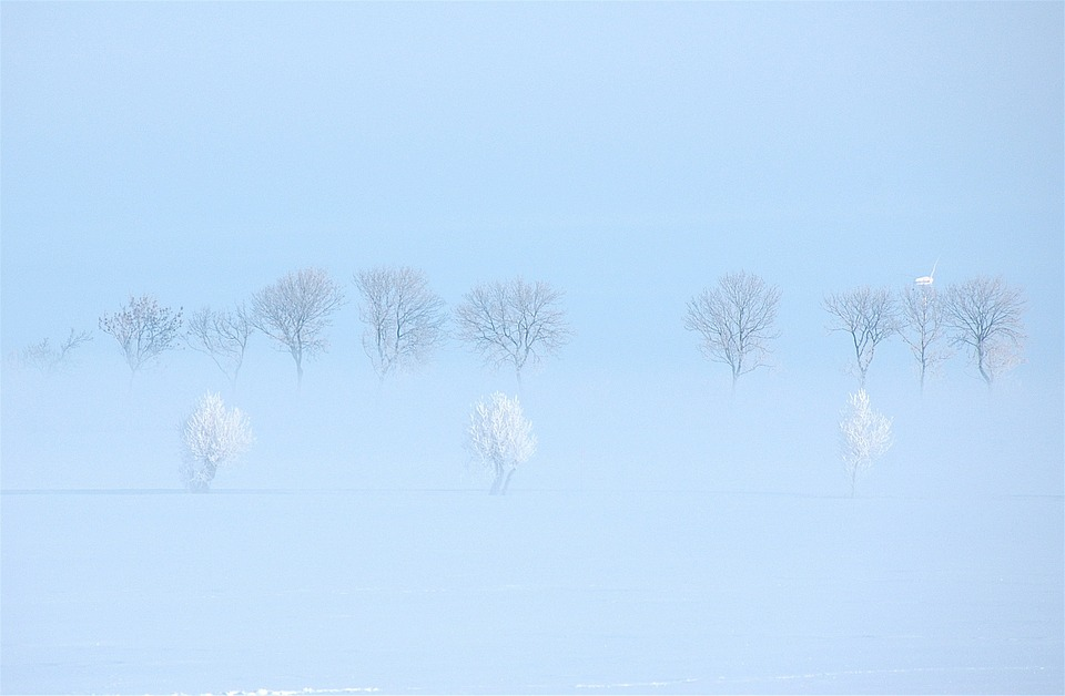 Winter, Sweden, Snow, Landscape, Frost, Scandinavia