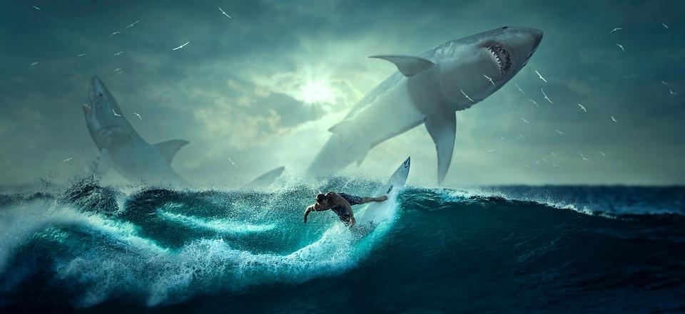 Shark, Fish, Surfer, Sea, Wave, Ocean, Scene, Sun