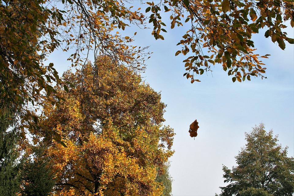 Fall, Autumn, Autumn Leaves, October, Scenery