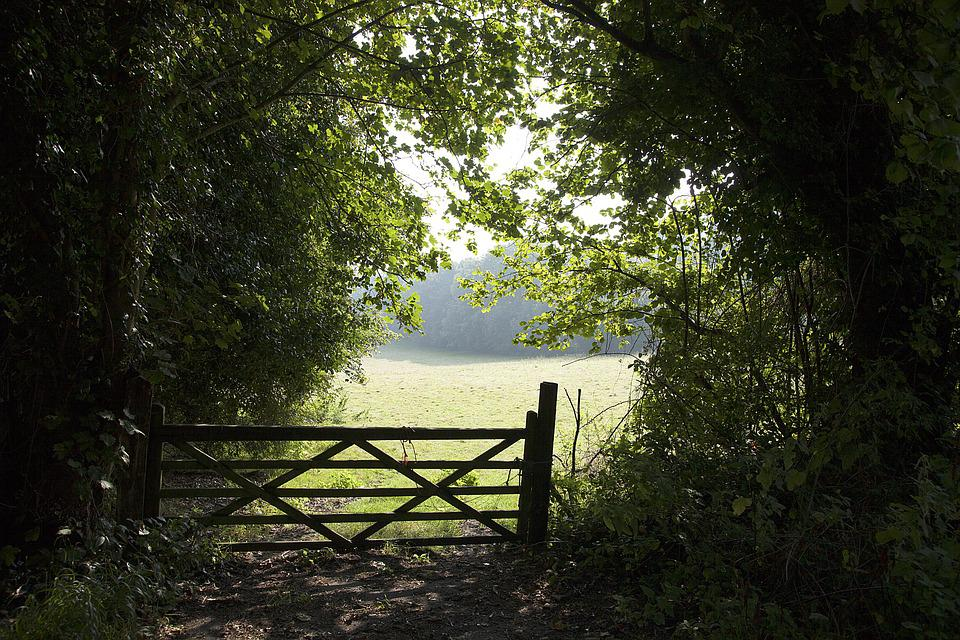 Gate, Field, Bush, Green Nature, Countryside, Scenery