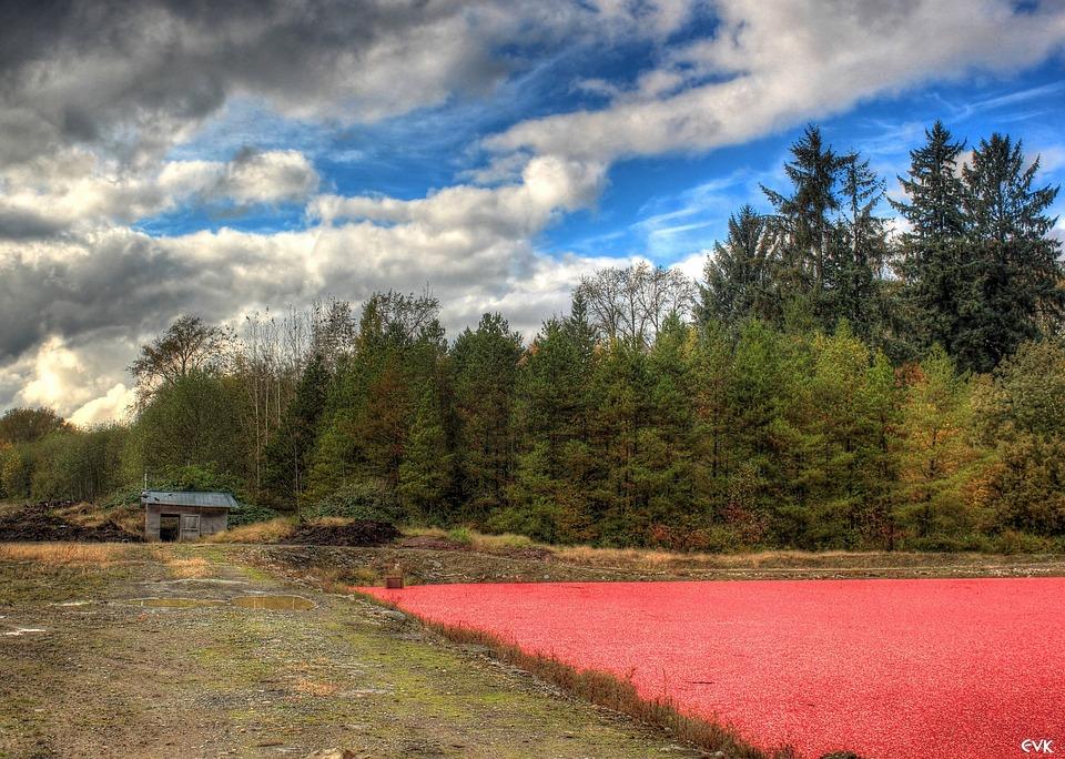 Shed, Cranberries, Farmland, Farm, Landscape, Scenery