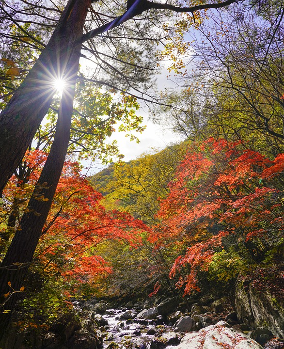 Korea, Autumn, Nature, The Leaves, Scenery, Forest
