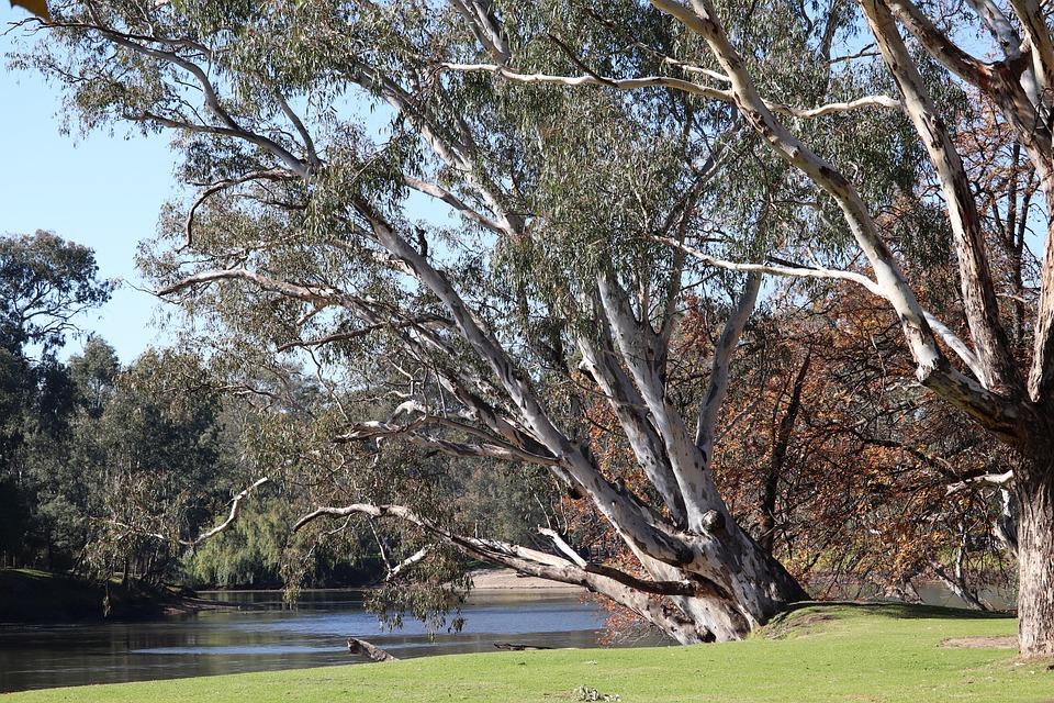 Trees, Gum, Eucalyptus, Park, Australia, River, Scenery