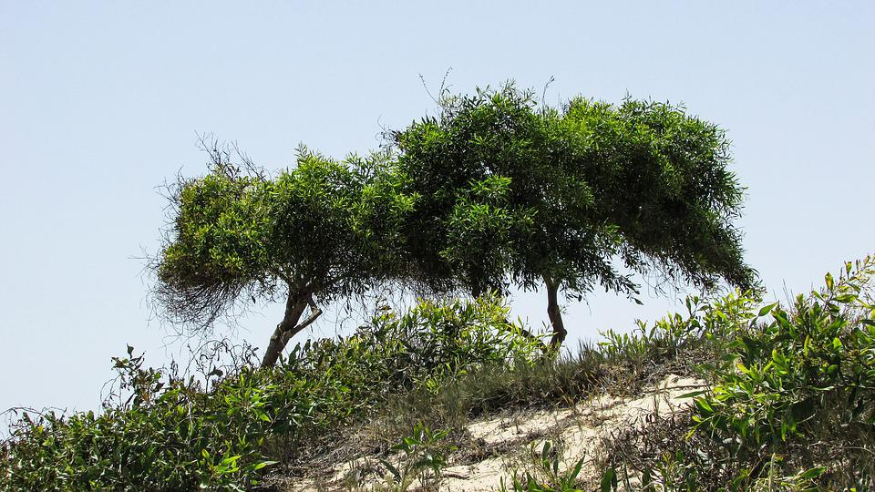 Trees, Dunes, Nature, Landscape, Scenery, Cyprus