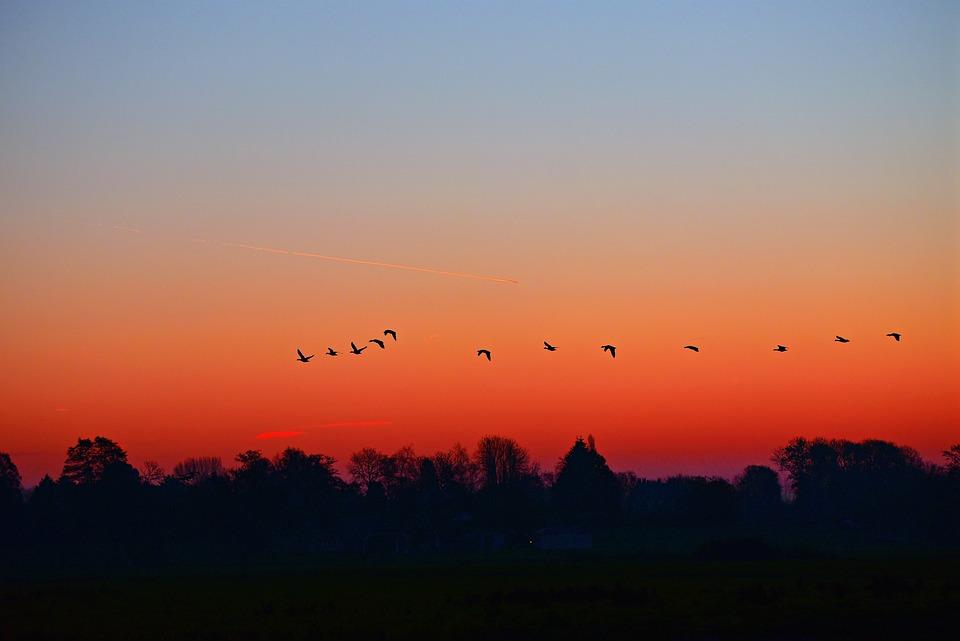 Sky, Birds, Scenic, Dusk, Dawn, Sunrise, Landscape