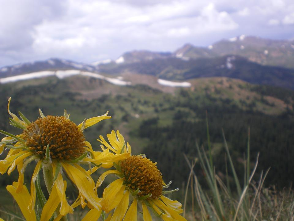 Flowers, Mountains, Clouds, Nature, Scenic, Alpine