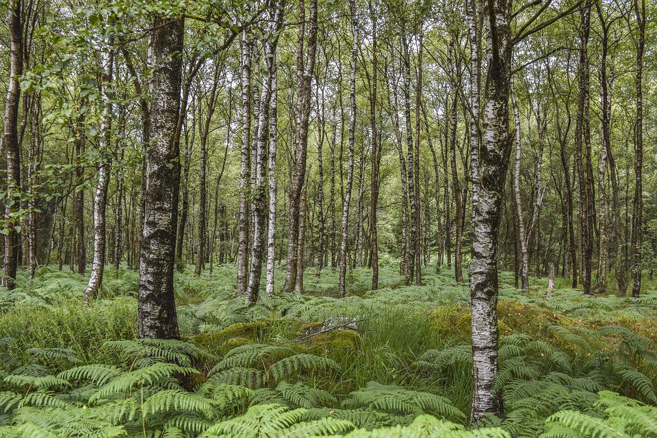 Forest, Nature, Landscape, Trees, Green, Wood, Scenic