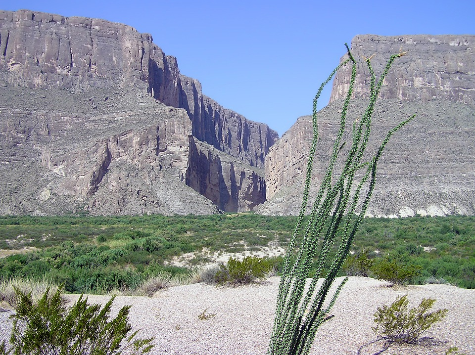 Big Bend, Texas, Landscape, Scenic, Plants, Mountains