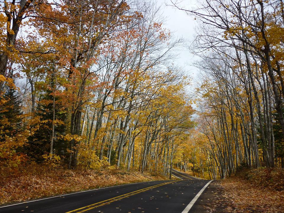 Road, Winding, Autumn, Travel, Scenic, Country, Forest