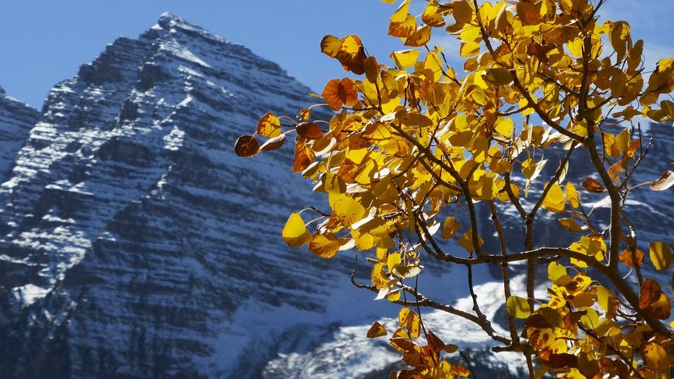 Mountain, Side, Landscape, Colorado, Scenic, Trees