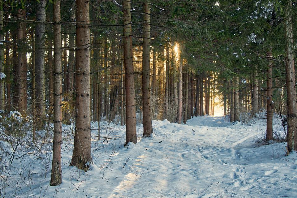 Snow, Winter, Wood, Tree, Frost, Light, Scenic, Cold