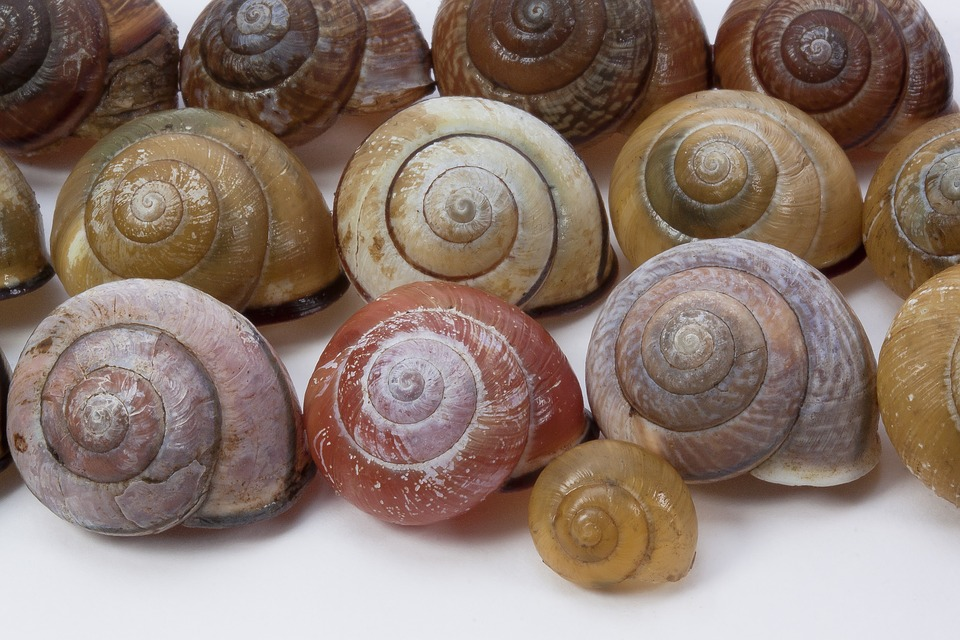 Snail Shells, Arianta Arbustorum, Schalenweichtiere