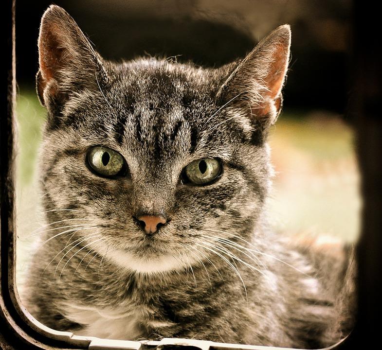 Cat, Domestic Cat, Animal Shelter, Scheu, Mieze, Kitten