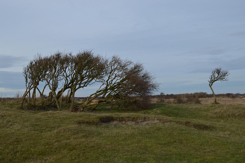 Island, Tree, Bush, Nature, Schiermonnikoog