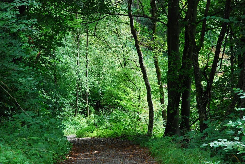 Wood, Nature, Landscape, Leaf, Tree, Schönwetter