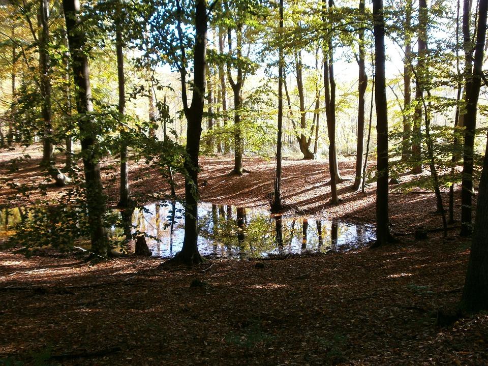 Pools, Schorfheide, October, Autumn, Forest, Landscape