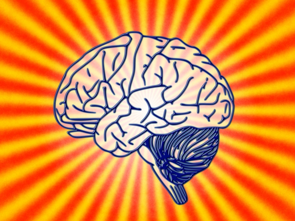 Brain, Science, Biology, Psychology, Brain Research