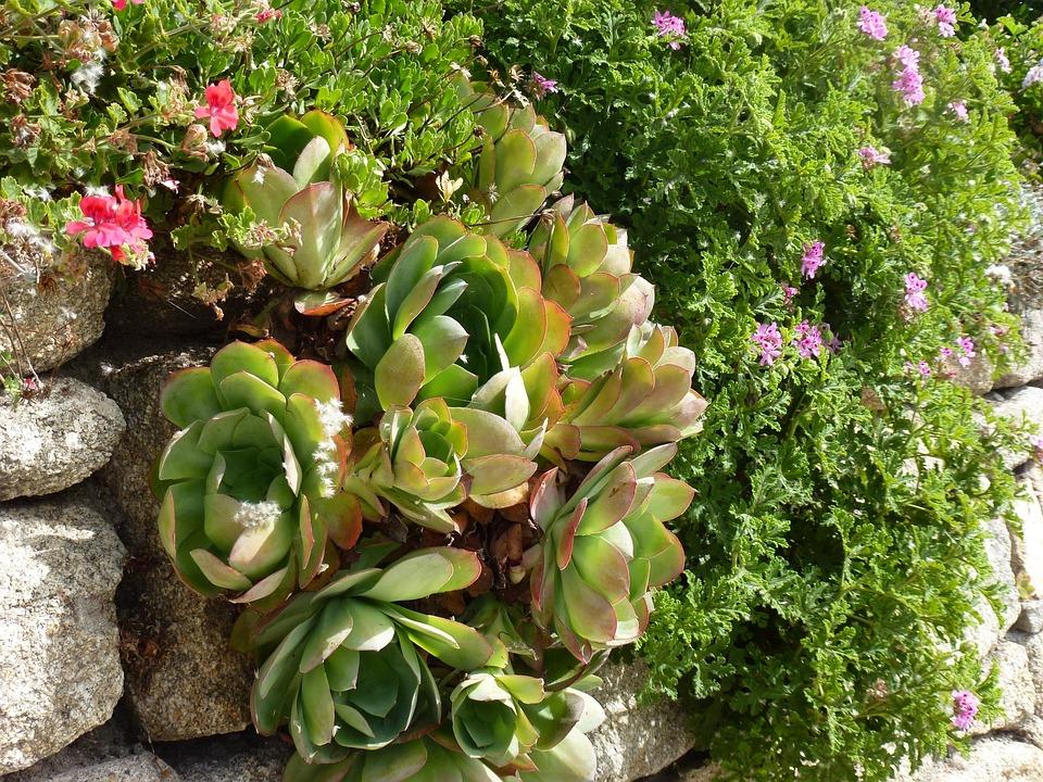 Gardening, Scilly Isles, Botanical, Flora