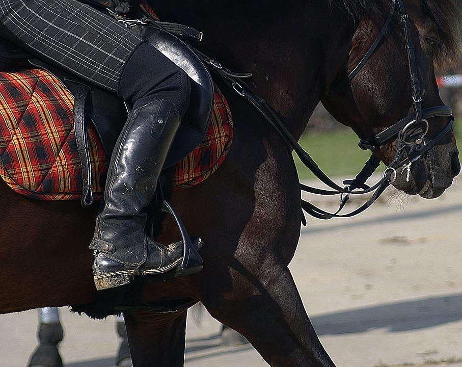 Harness Horse, Breed, Hutsul, Bridle, Halter, Scold's