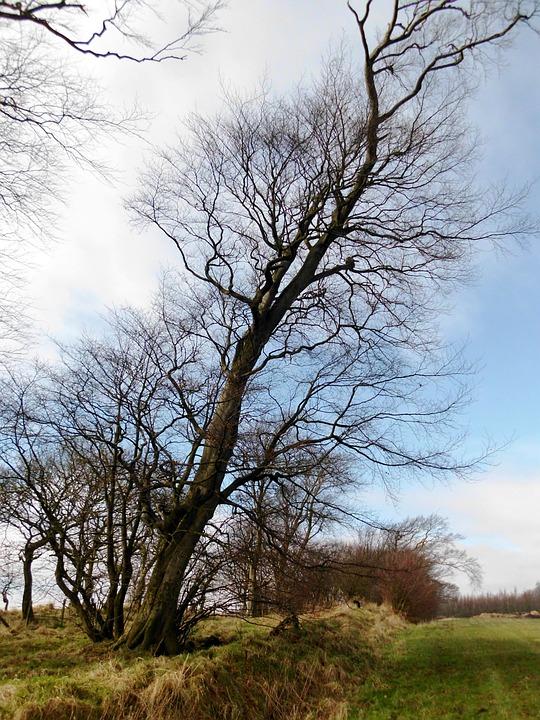 Autumn, Large Tree, Scotland