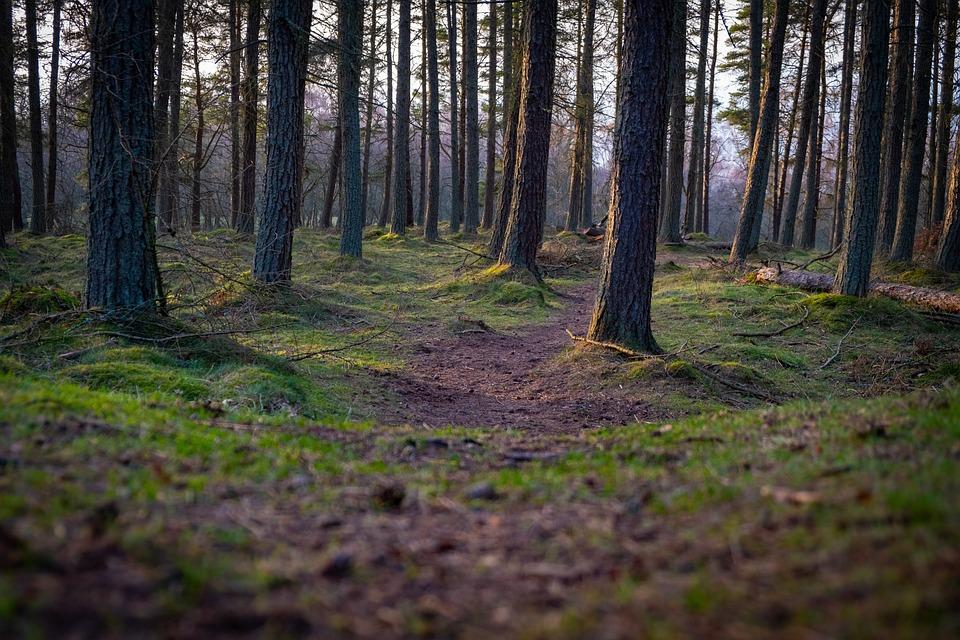 Kinnoull, Scotland, Britain, Uk, Landscape, Nature