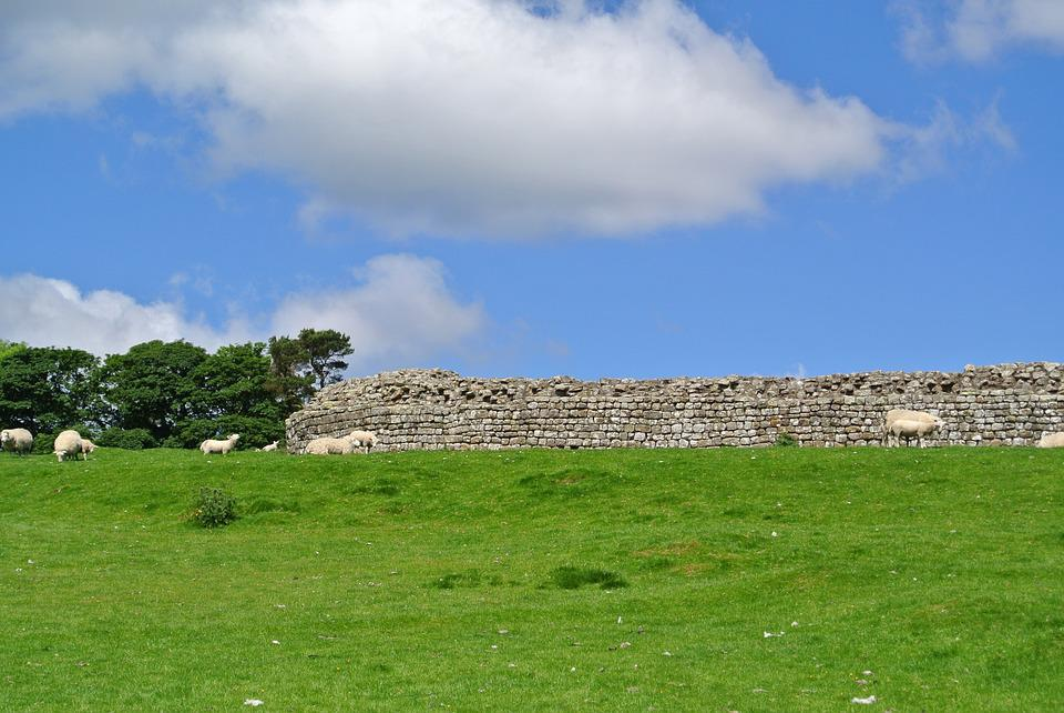 Scotland, Sheep, Nature, Wool, Sky Blue, Clouds