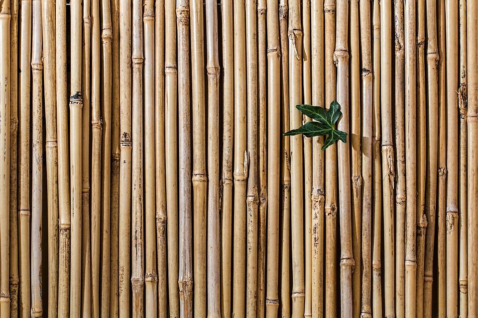 Bamboo, Barrier, Screen Fence, Desktop Wallpaper