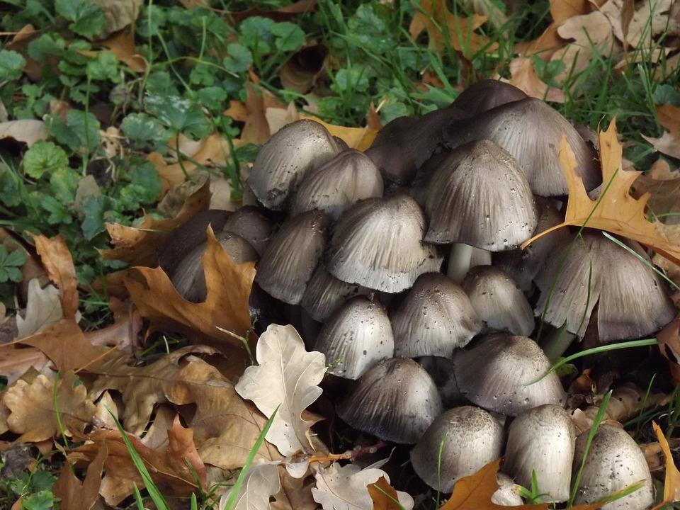 Screen Mushrooms, Mushrooms, Forest Mushrooms