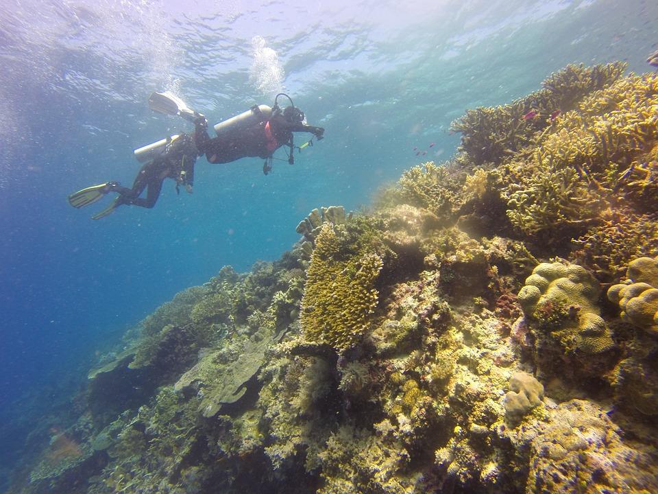 Scuba Diving, Scuba, Diving, Diver, Coral, Reef
