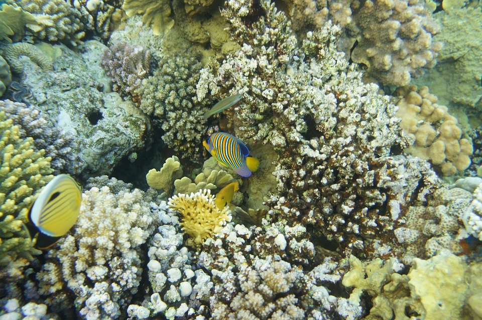 Your Red Sea, Coral, Tofik, Scuba Diving, Fish, Exotic