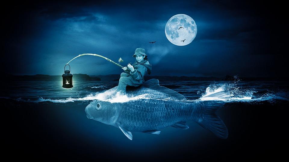 Frogfish, Fish, Angler, Sea, Water, Night, Moonlight