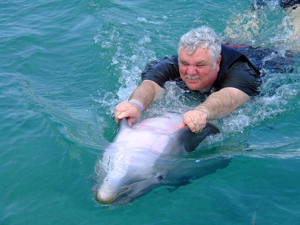 Dolphin, Water, Sea, Ocean, Animal, Blue, Aquatic